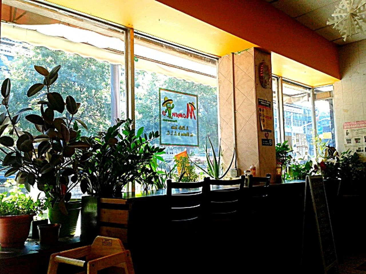 chair, indoors, window, table, potted plant, architecture, no people, architectural column, built structure, growth, plant, day, tree, nature
