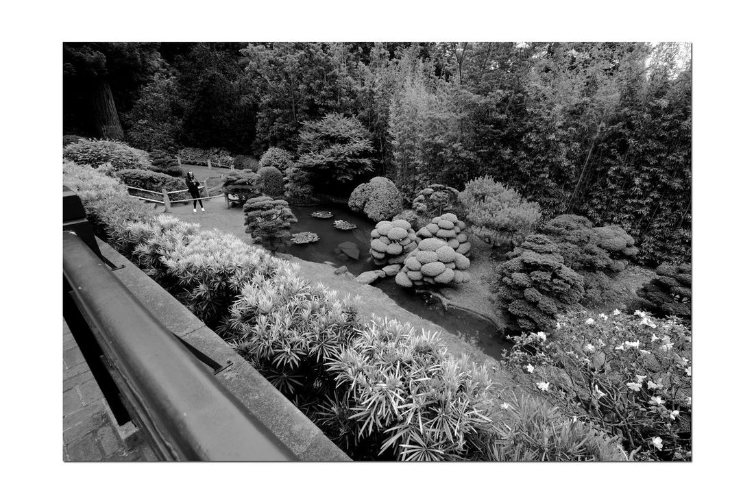 Japanese Tea Garden _ Monochromatic 2 Golden Gate Park San Francisco, Ca. The Oldest Public Japanese Tea Garden In U.S. Built In 1894 For World's Fair 5 Acres Makoto Hagiwara : Caretaker 1895-1925 Garden Garden_lovers Garden_collection Garden Photography Landscape Monochrome Landscape_Collection Landscape_photography Black & White Black And White Photography Black And White Black And White Collection  Grayscale Manicured Trees & Hedges Woman Taking Picture