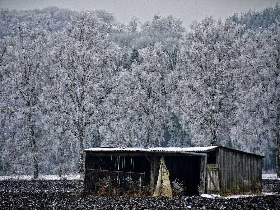 Unterstand Cold Temperature Cottage Nature No People Outdoors Reif Schutzhütte Schwabenland Shed Snow Snowing Tree Wald Winter