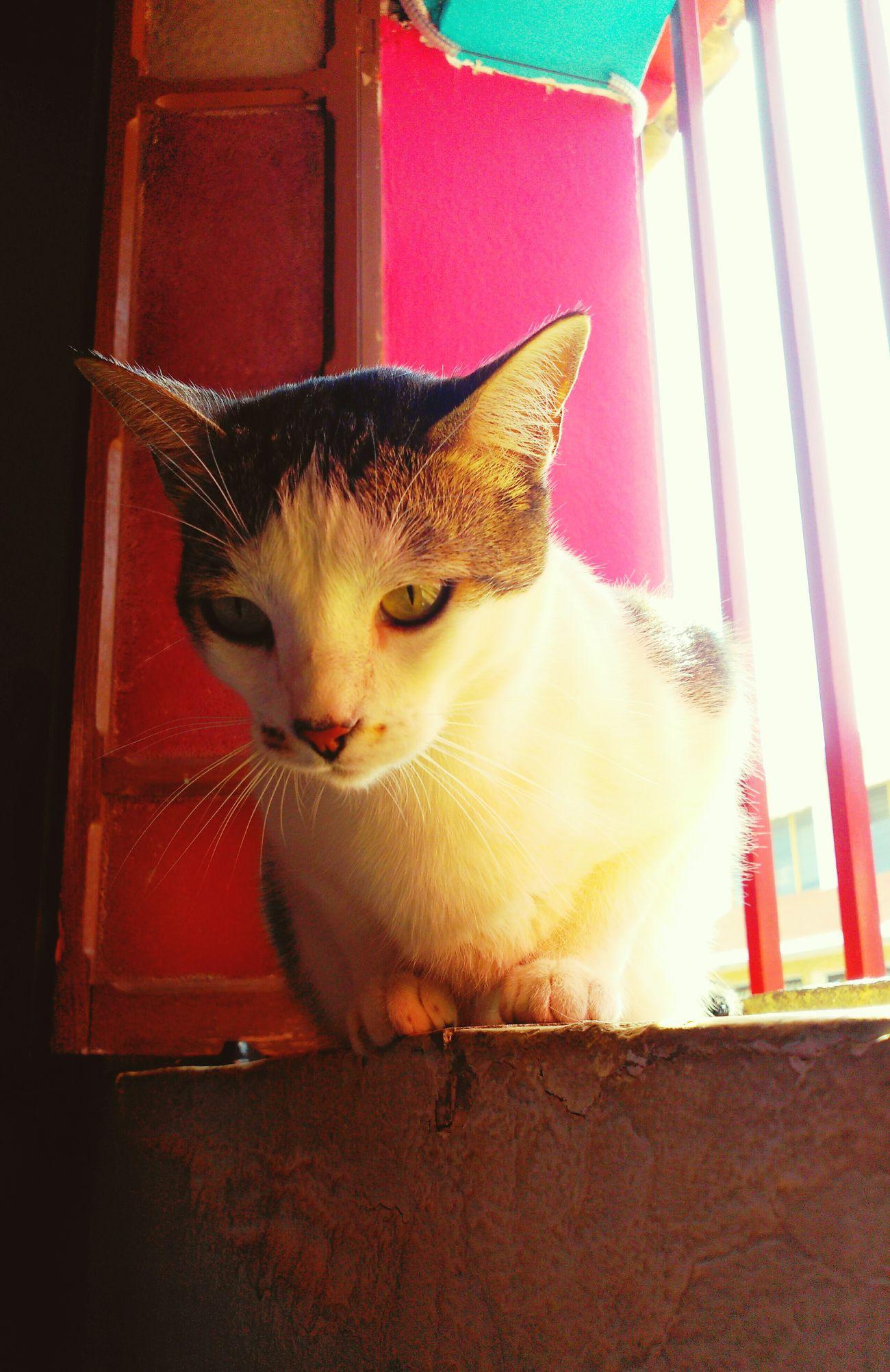 Matilda Domestic Cat Cats 🐱 Caturday ! Cats Of EyeEm Catsoftheworld Catslover Catslife Gato😽 Gatto😸 Gatita  Gata ♡ Gats :))