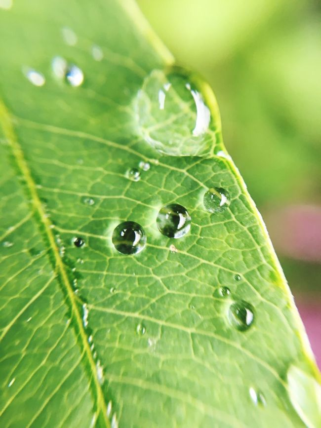 Light And Shadow Close-up Leaf Green Color Water Nature Green Extreme Close-up Fragility Focus On Foreground Plant