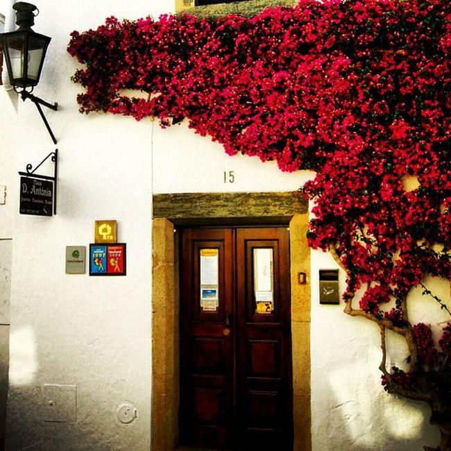 #igersportugal #portugaligers #iphone5 #iphonesia #iphoneonly #iphonegraphy #iphonephotography #instagood #instagram #instalove #instamood #instagramers #instagramhub #p3top #portugal_em_fotos #portugaldenorteasul #portugaloteuolhar #alentejo #evora #regu Instagramhub Instalove Flowers Iphonegraphy Portugaligers Holidays Igersportugal Iphoneonly Portugaldenorteasul Iphonesia Alqueva Instagram Iphonephotography IPhone5 Portugaloteuolhar Portugal_em_fotos Instamood Évora  P3top Reguengosdemonsaraz Alentejo Pensao Instagramers Instagood