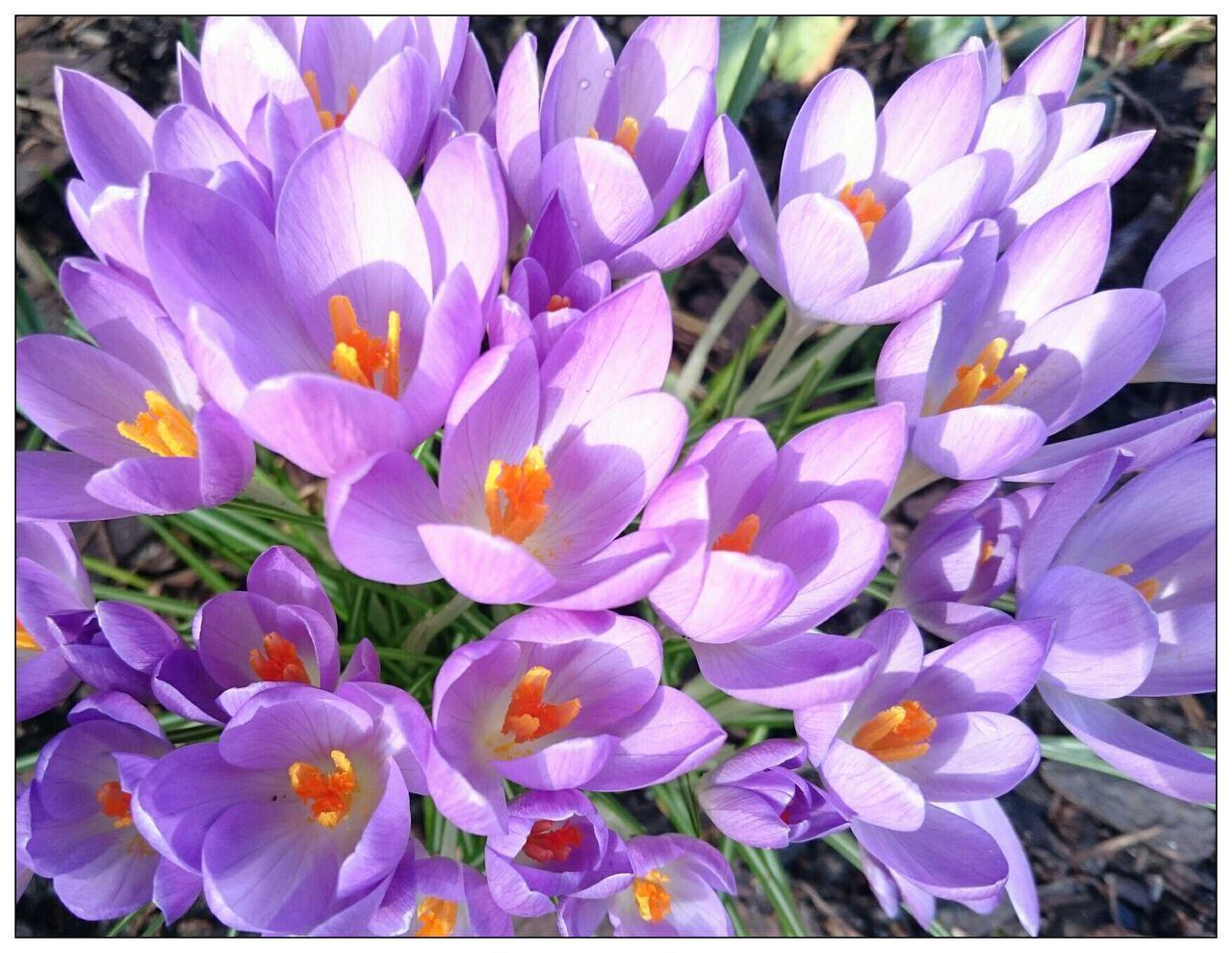 Frühlingserwachen-Spring Awakening?? Streamzoofamily Flower Porn EyeEm Best Shots - Nature For You ;-)