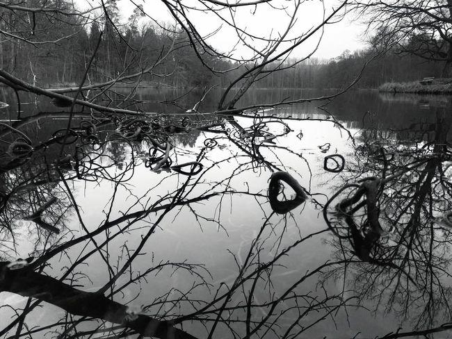 Lake Bärensee Black And White Stuttgart Germany Nature Natur B&w