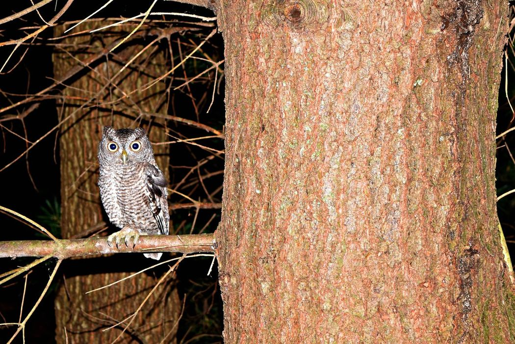 Owl Wilderness Walk Michigan Birds Great Outdoors Natural Beauty Nature Photography Creatures Of The Night Hoot Hoot Owl Eyes Outdoors Modestmills