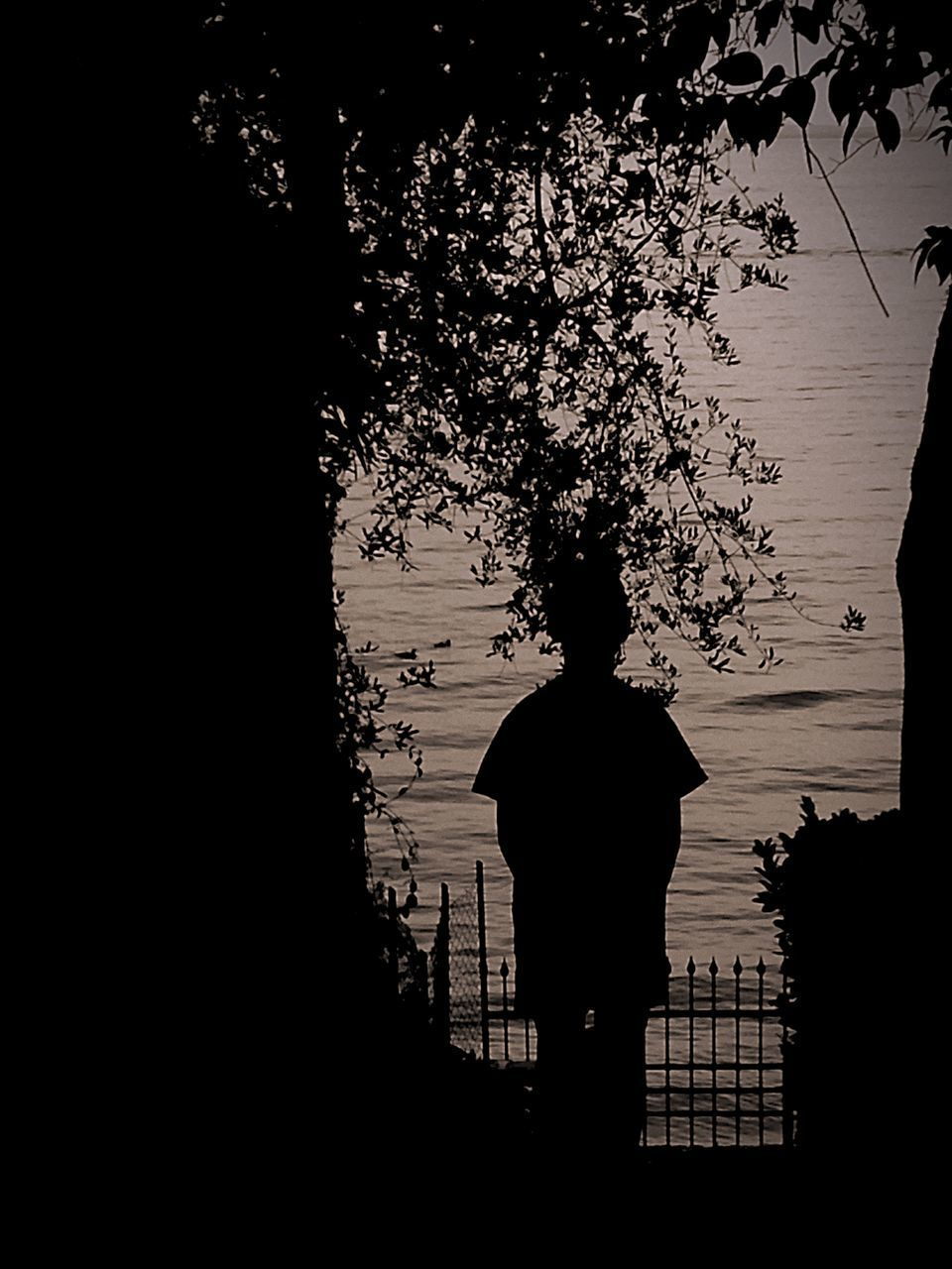 silhouette, sunset, tree, water, sky, tranquility, branch, nature, dusk, tranquil scene, scenics, beauty in nature, outline, reflection, growth, tree trunk, lake, outdoors, built structure, no people