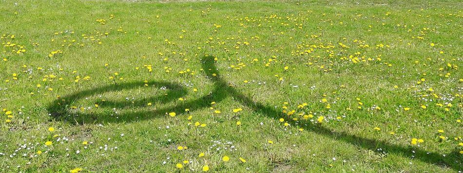 Schatten einer Tarot Skulptur der Kunstgrenze Grass Green Color Nature Growth Sunlight Day Shadow Freshness ArtWork Shadow-art Spring Flowers Kunstgrenze Borderline Ornament No People Beauty In Nature Outdoors Art Is Everywhere Symbol