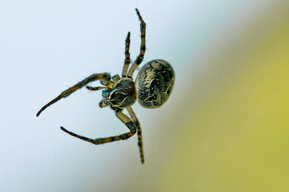 Beautiful stock photos of spider's, Animal Themes, Animals In The Wild, Arachnid, Close-Up
