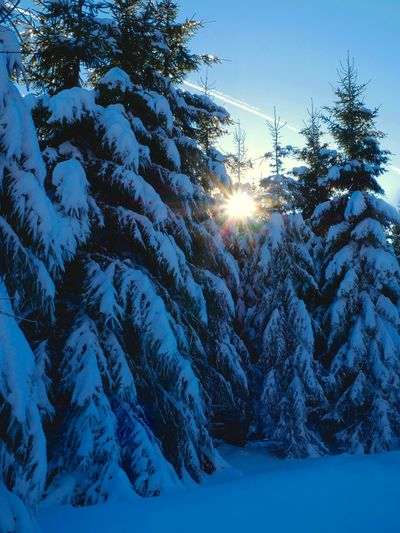 Beauty In Nature Cold Temperature Day Landscape Lens Flare Nature Outdoors Scenics Snow Sun Sunbeam Sunlight Tree Winter