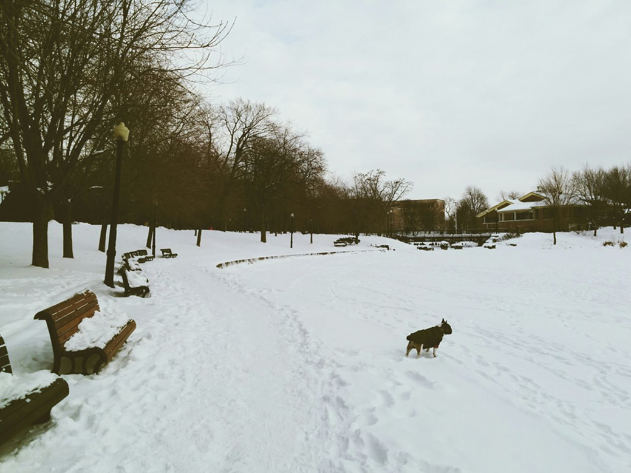 Curious Dog in a Park. Winter Snow Cold Vscocam