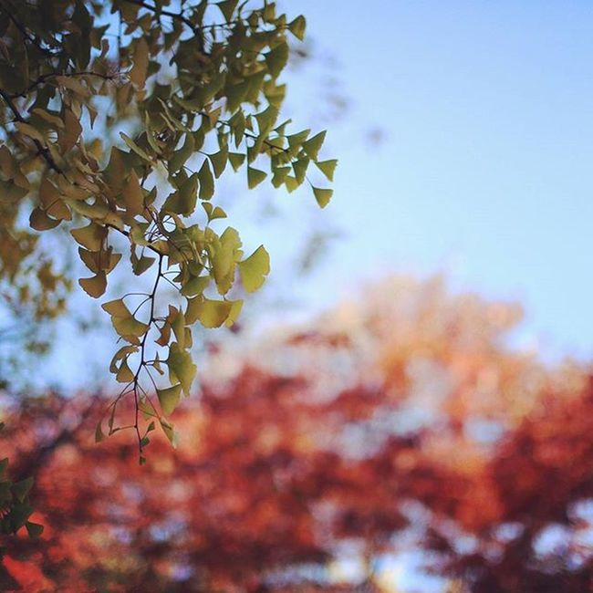 가장 사랑하는 날씨 이불 밖은 언제나 위험하지만 카메라 챙기고 헤드폰끼고 뛰쳐나가고 싶은 날씨이이 가을 단풍 Landscape Wanderlust 50mm 5dmkiii