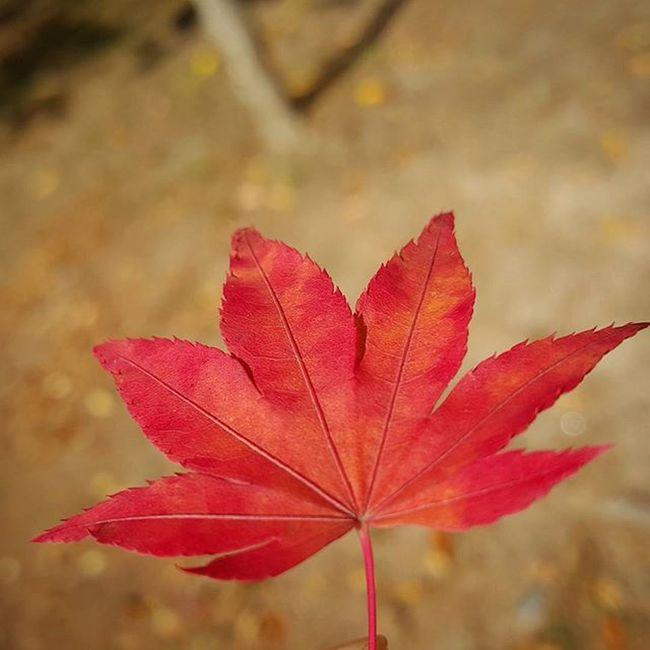아 추워!!! 뭐야.. 가을아~ 어디간거야?😢 ☆ 단풍 가을 가을스타그램 춥다그램 맘도시리다 겨울아천천히오렴