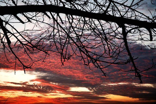 Tadaa Community My Sunset EyeEm Best Shots - My World Sunset Madness My Photographic World Sky Collection EyeEm Best Shots - Sunsets + Sunrise Sunset Silhouettes EyeEm Best Shots - Nature Sun_collection, Sky_collection, Cloudporn, Skyporn