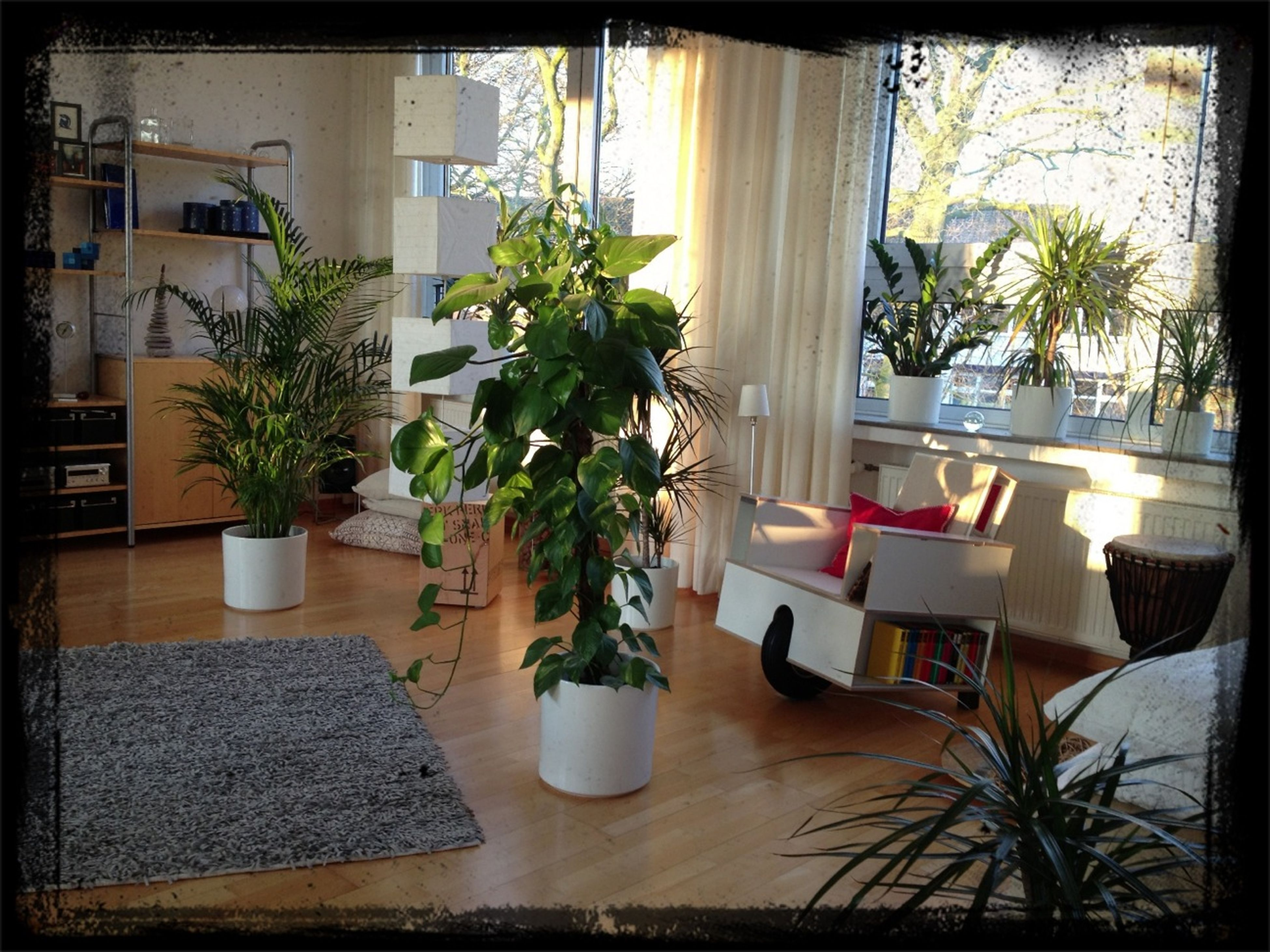 potted plant, table, indoors, chair, transfer print, architecture, plant, built structure, window, house, auto post production filter, absence, growth, empty, building exterior, sunlight, restaurant, home interior, day, flower pot