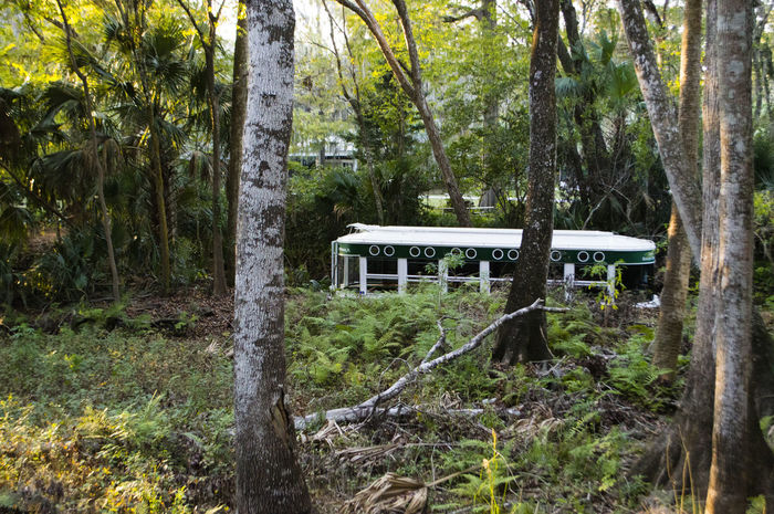 Silver Springs State Park, Ocala FL Beauty In Nature Boat Day Forest Glass Bottom Boat Grass Green Color Landscape LyncasterPhotography Nature Outdoors Plant Scenics Silver Springs Silver Springs Florida Silver Springs State Park Tranquil Scene Tranquility Tree Tree Trunk