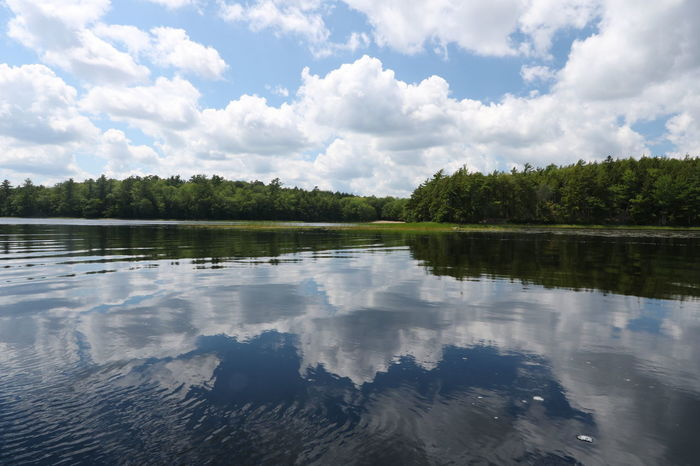 Beauty In Nature Cloud - Sky Day Forest Kejimkujik Lake Nature No People Outdoors Reflection Scenics Sky Tranquil Scene Tranquility Tree Water