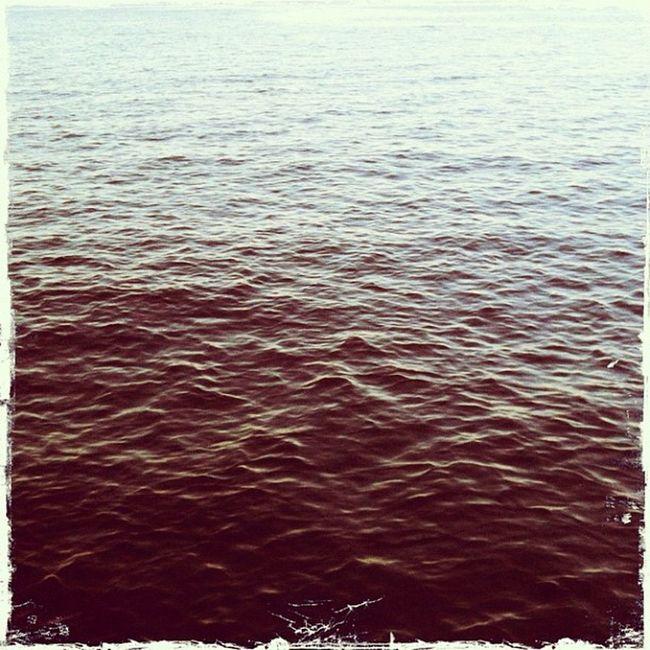 #väddö #havsskogen Väddö Havsskogen