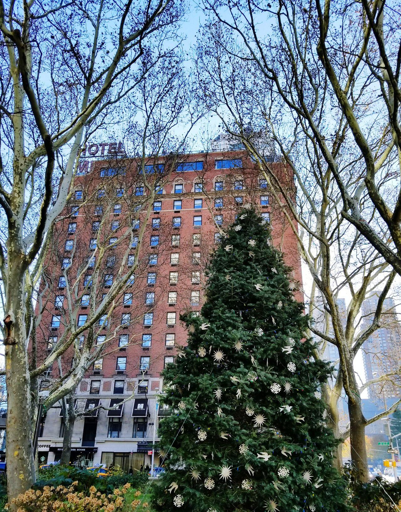 Christmas Tree Holiday Season City Life New York Manhattan New York City Travel Destinations