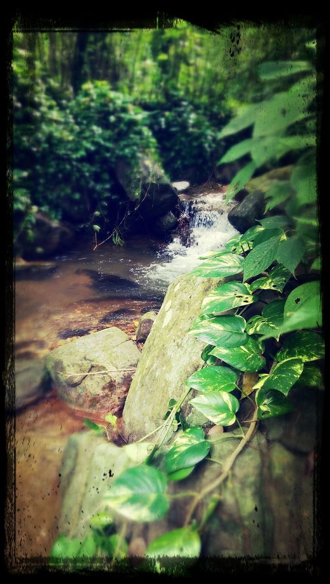 Nature at it best nourished with heavy rain. Nature_collection Waterscape