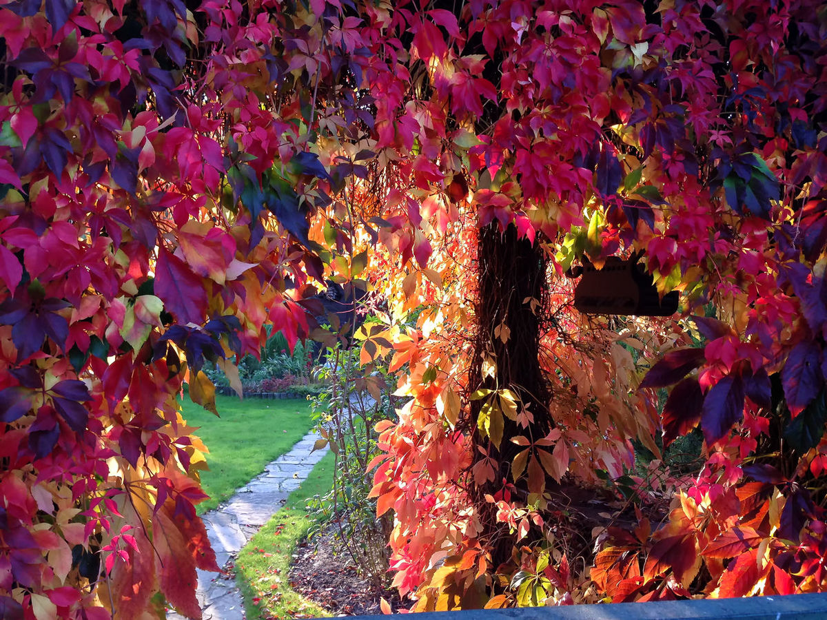 leaves in the garden Autumn Beauty In Nature Fall Fall Beauty Fall Leaves Garden Leaf Leaf 🍂 Leaves Leaves🌿 Multi Colored Nature Outdoors Plant
