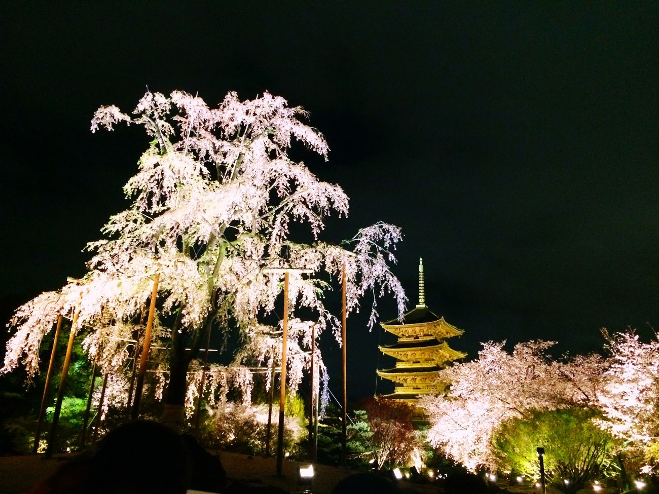 枝垂れ桜 Kyoto Japan Temple Toji Temple Cherry Blossoms Weeping Cherry Tree Five-storied Pagoda Japanesebeauty