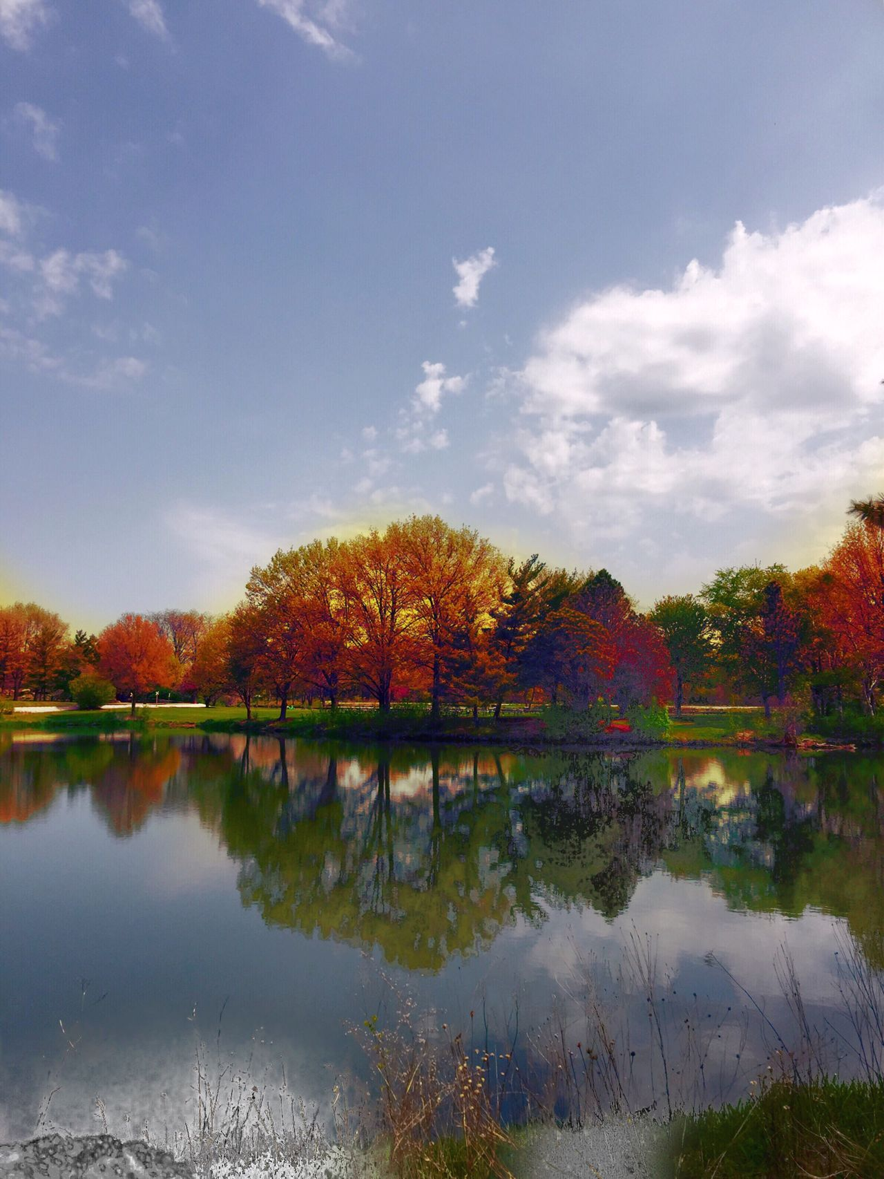 Four Seasons  Tree Reflection Nature Water Sky Beauty In Nature Autumn Lake Scenics Abstract Abstractions In Colors Abstract Photography My Own Style Of Beauty Landscape Landscape_Collection The Week Of Eyeem Change Growth Tranquility Outdoors No People Waterfront Day Grass
