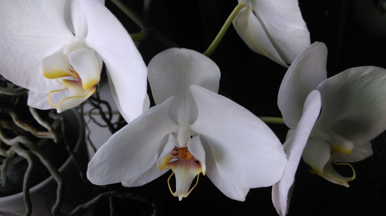 Macro Beauty Orchird  Orchidee. Orchid Orchidflower Flowers At Home Nature's Diversities