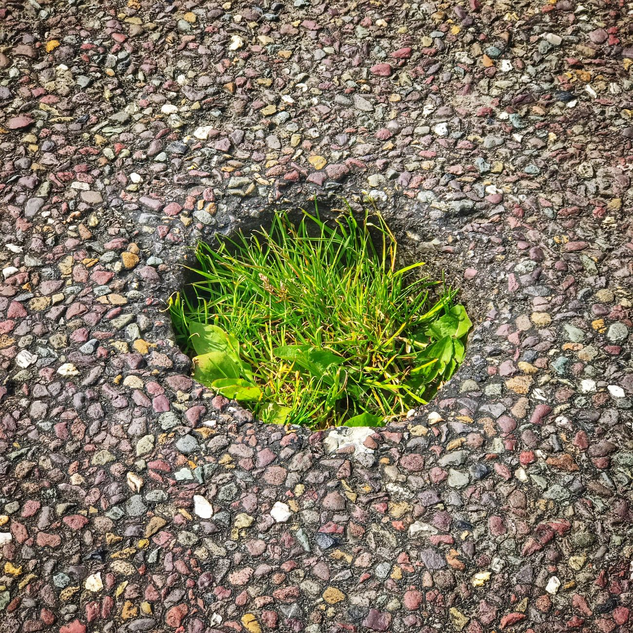 Worlds cutest most uniform pothole Nature Growth High Angle View No People Outdoors Day Plant Green Color Close-up Pothole Potholes Road Cute Uniform Ireland County Cork Cork County Council