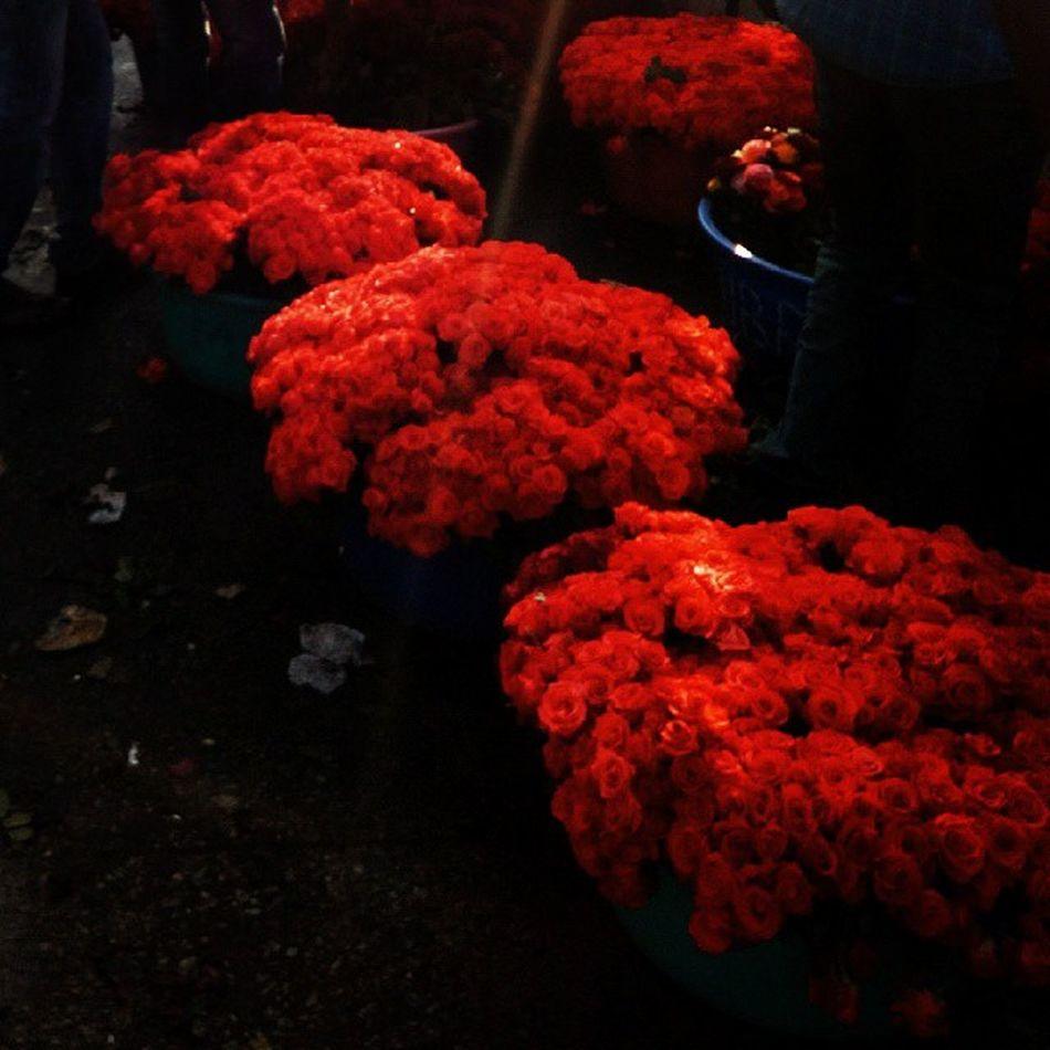 Market Bangalore Namma_bengaluru Instabangalore Rosé Red Bengalurudiaries Vamp Instairis Instaphotography India Vscocam VSCO Vscobestpictures Arun_emperor