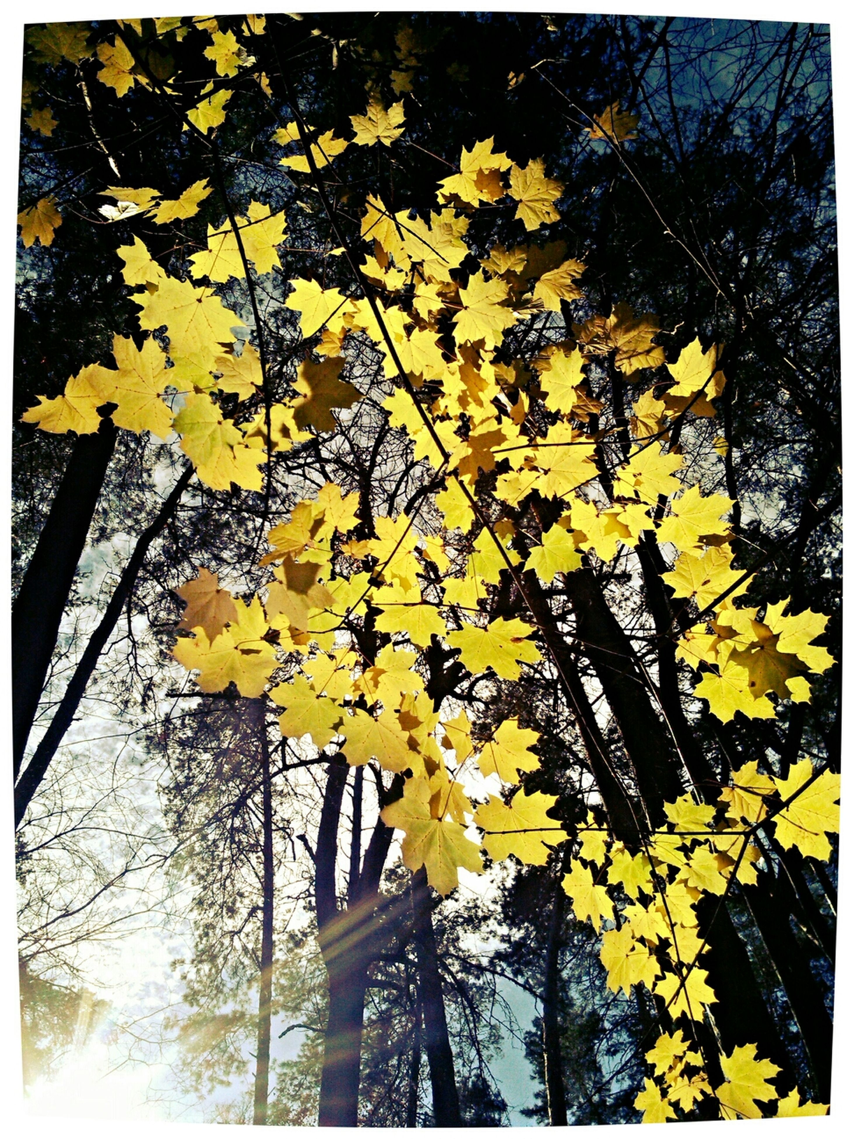 yellow, transfer print, flower, auto post production filter, growth, season, tree, leaf, nature, autumn, beauty in nature, branch, change, fragility, day, freshness, outdoors, sunlight, no people, close-up