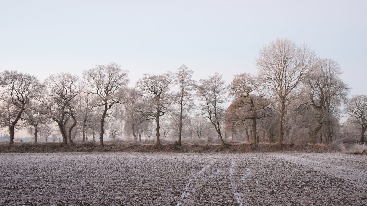 Winter in Ostfriesland Bare Trees Frozen Morning Nature No People Outdoors Scenics Tree White Frost Winter