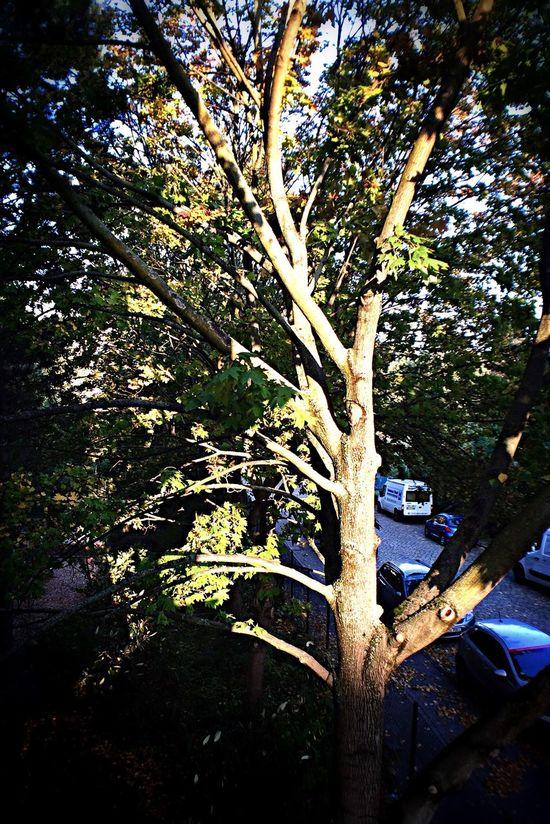 Mein Freund, Der Baum Ihn werde ich vermissen.