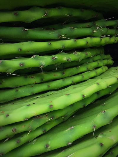 Produce with needles Full Frame Green Color Vegetable Stack Large Group Of Objects Close-up Repetition Freshness Abundance Group Of Objects Green Cactus Order Backgrounds Arrangement