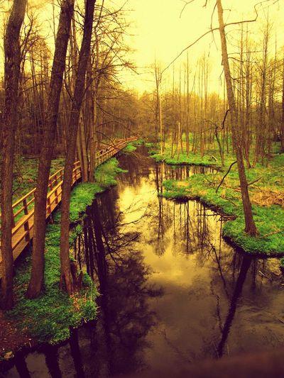 Mam sentyment do tego zdjecia <3 Beautiful Nature Relaxing Polishgirl Hello World Lovelovelove 💟👑🙌🙌