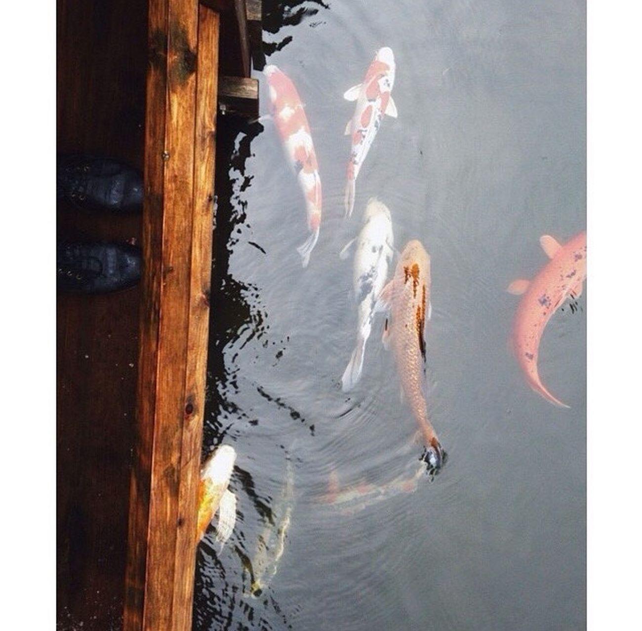 China fish Fish Chinnese