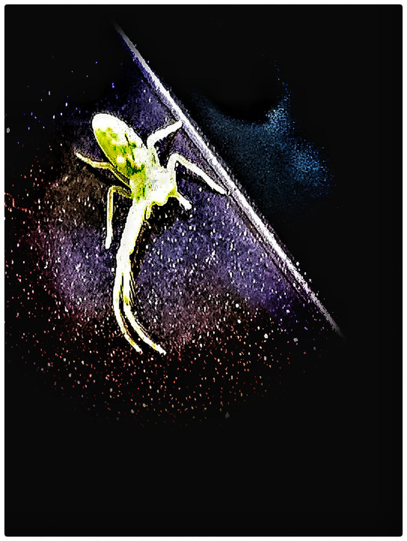 A tiny fluorescent green spider. Spider Fluorescent Light Animals Spiderworld Close-up No People Animal Themes Night Digitally Generated Nature Outdoors Lifeisbeautiful Life Colour Of Life Beauty In Nature Nature HuaweiP9
