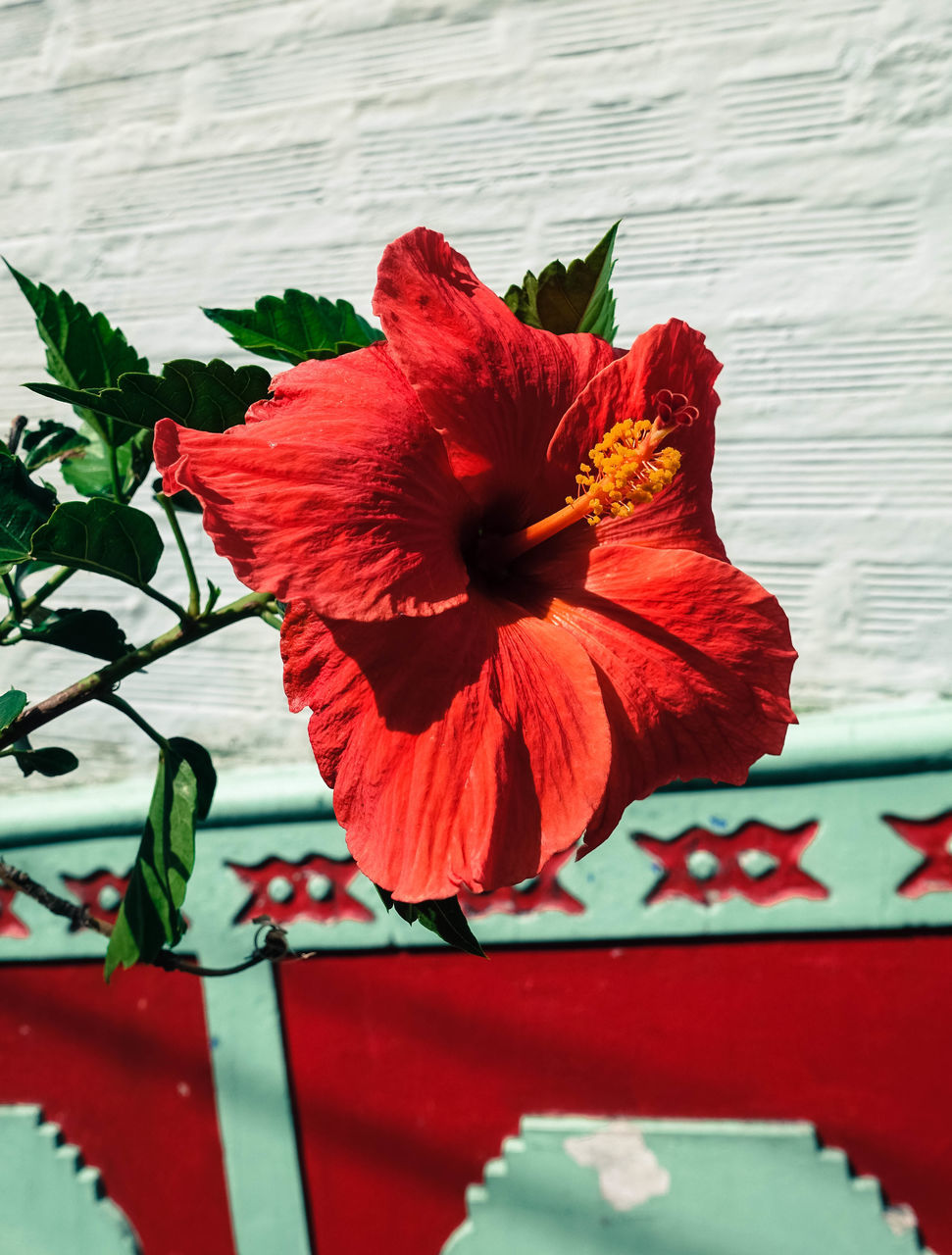 flower, red, petal, flower head, fragility, beauty in nature, no people, freshness, nature, plant, close-up, hibiscus, day, growth, leaf, outdoors, blooming