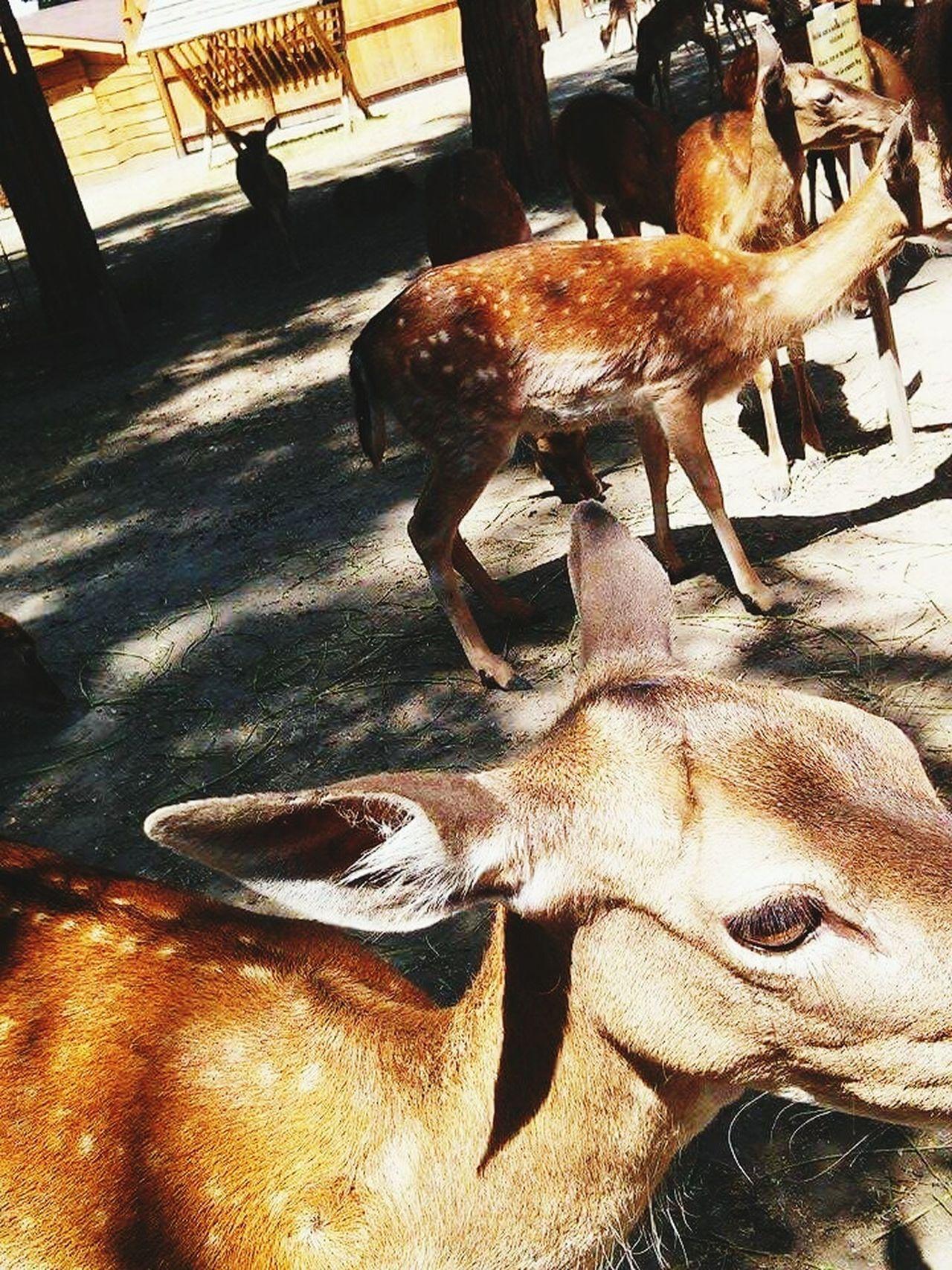 Deer Bambi Brown White Dots Whitedots Nature Animals Wildlife