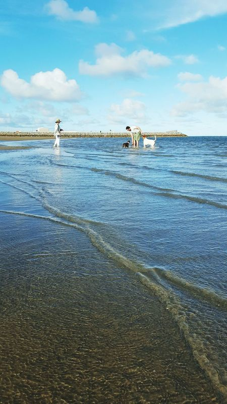 Sea Day Outdoors Nature Water Beach Cloud - Sky Sky MariNelson Sand Dogs Pets Tropical Adults Domestic Animals Townsville North Queensland Australia Second Acts