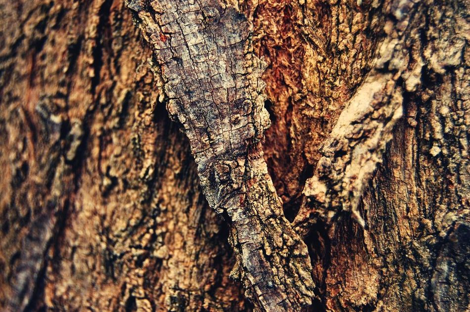 Textured  Full Frame Backgrounds Close-up Wood - Material Nature Tree Trunk No People Rough Tree Brown Pattern Outdoors Day Bark Knotted Wood Troncos Tronco Wood Tree Nature EyeEmNewHere