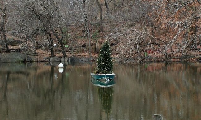 Christmas Tree Reflection The Culture Of The Holidays Tree Water Xmas Tree NYC Photography Central Park - NYC
