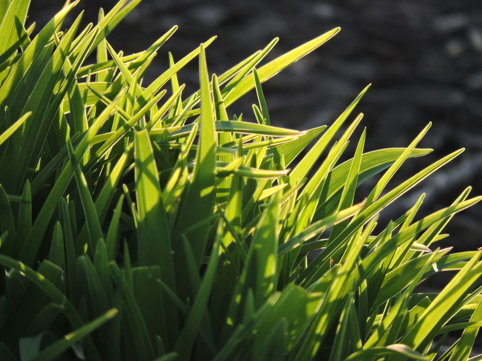 Agriculture Art Is Everywhere Beauty In Nature Close-up Day Field Freshness Grass Green Color Growth Nature No People Outdoors Plant Sunlit