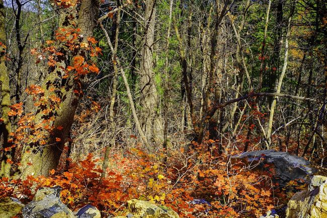 Fourth of July Canyon in New Mexico is a great place to capture fall color. Fall Beauty Autumn Colors Red Oak Red Oak Leaves