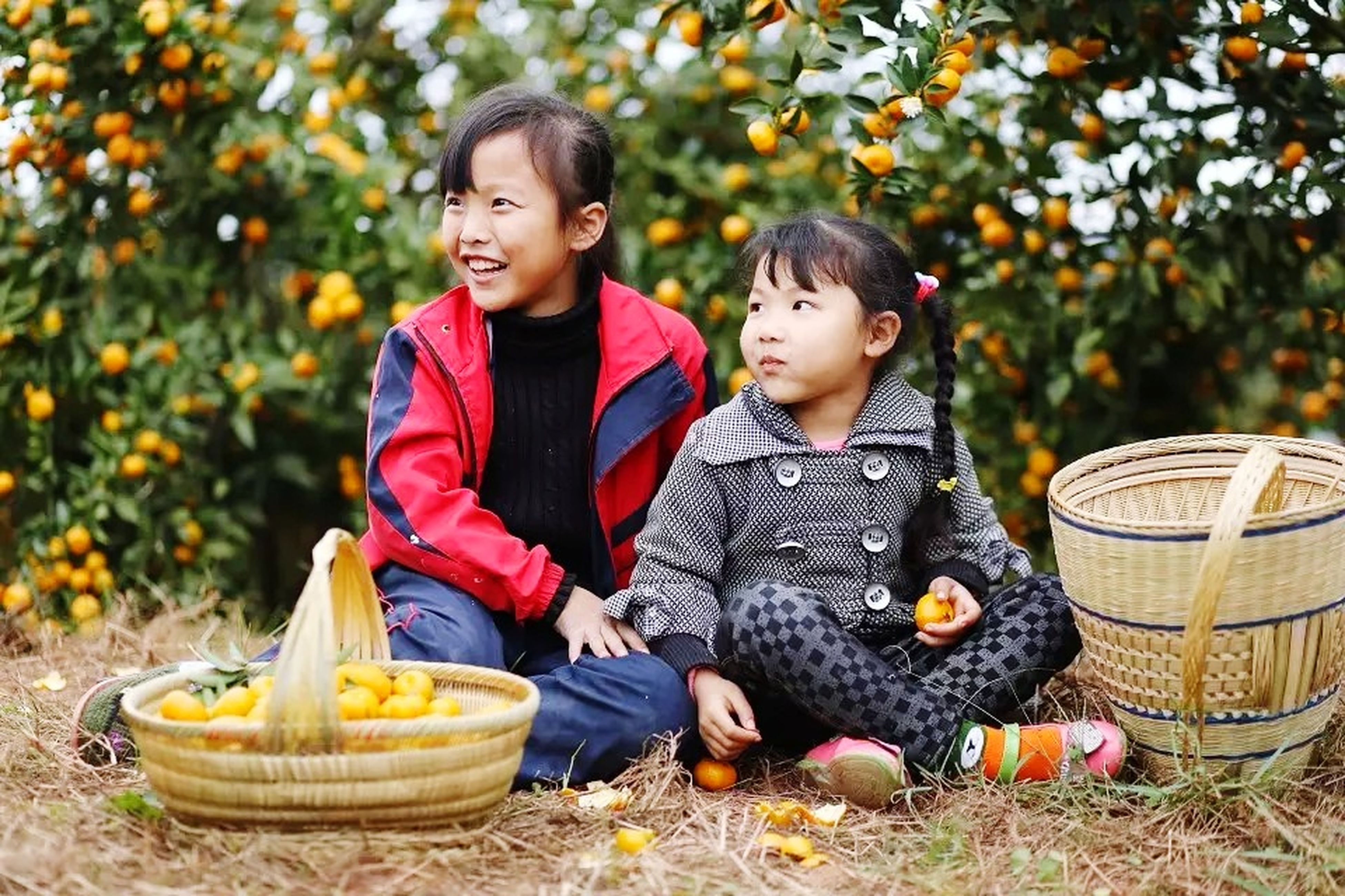 boys, childhood, togetherness, son, family with one child, smiling, outdoors, child, basket, day, real people, males, full length, food, tree, pumpkin, people, halloween, adult