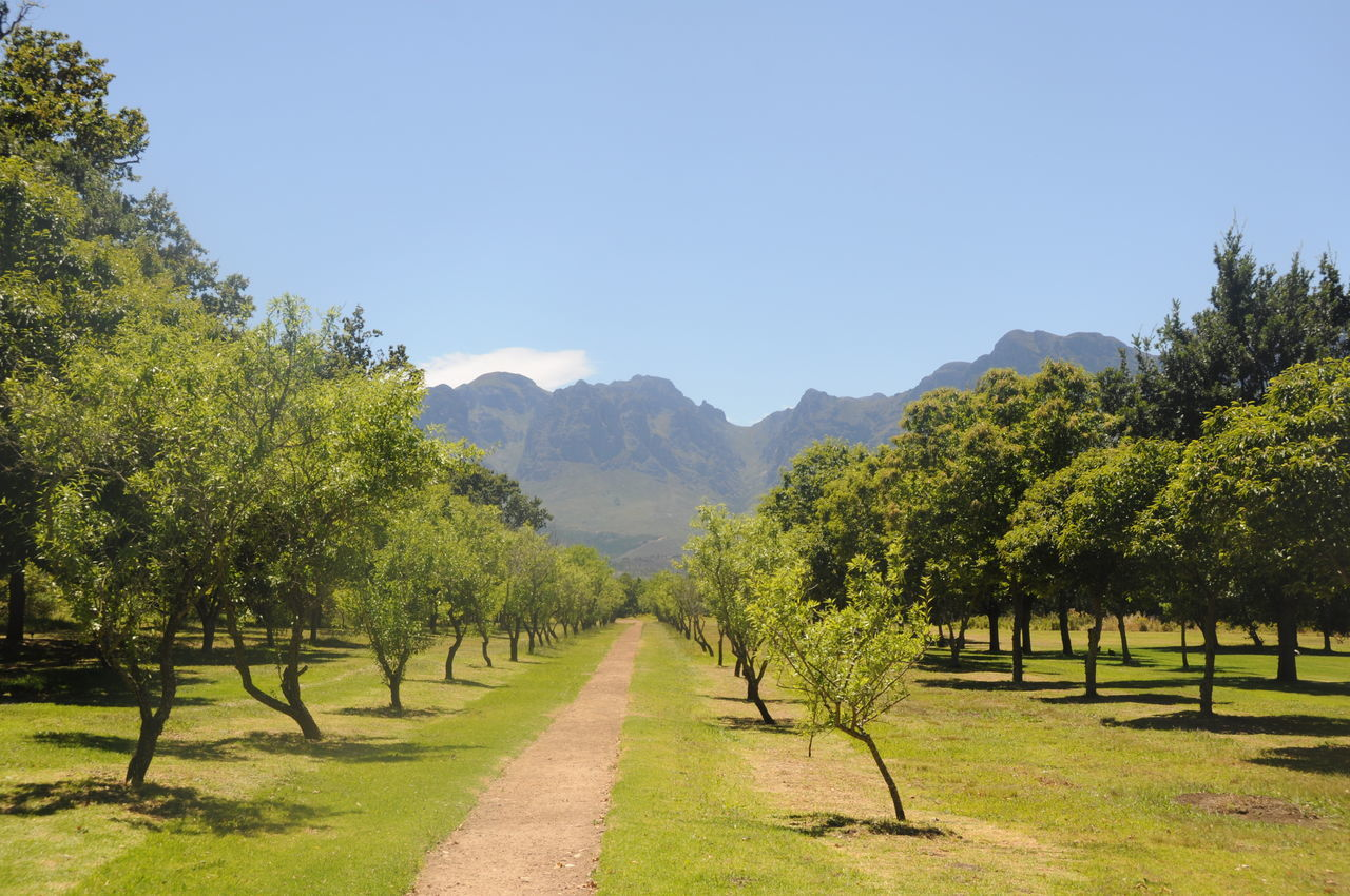 Beautiful stock photos of obst,  Beauty In Nature,  Cape Town,  Clear Sky,  Day