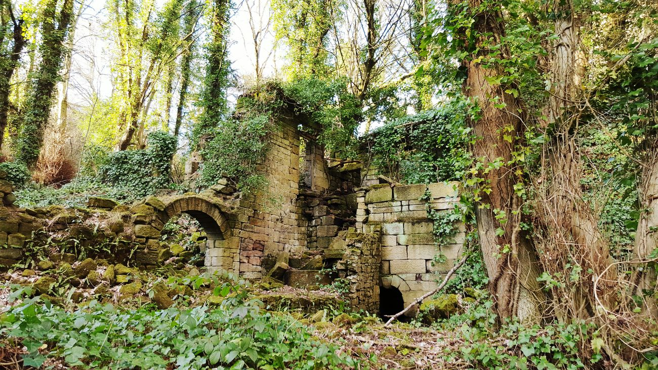 Lost World Ruins Lumsdale Derbyshire Uk At Home With Nature A Walk In The Woods Natural Beauty Woods My Countryside