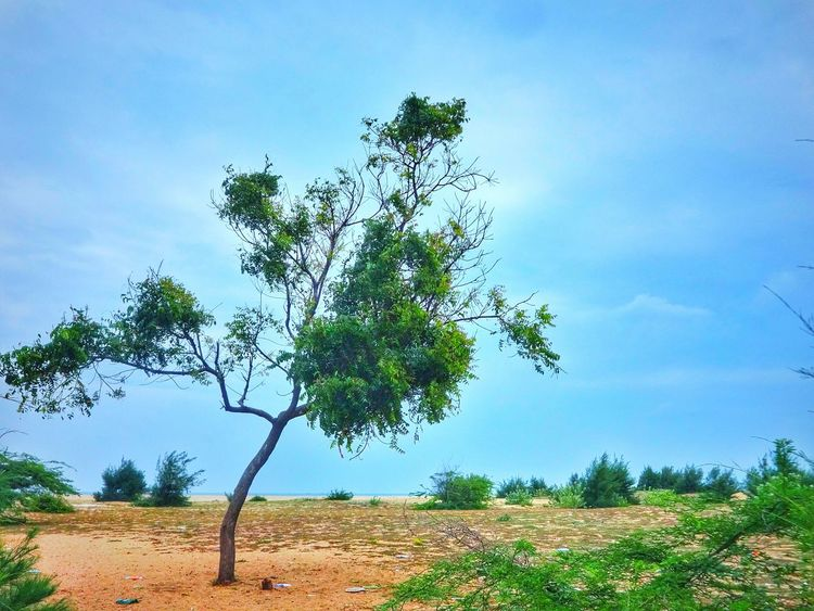 Wierdest tree and scariest 😰😵 Trees Neem Tree Small Tree Wierd&beautiful Scary Places Life Is A Beach Pulicat Sea Green Nature EyeEm Nature Lover Being A Beach Bum Saturation Sand Something Got Wrong Tamilnadu Tadaa Community Midday Sunlight Vacation Picnic Blue Sky Sky_collection Thorns Weeds Landscape