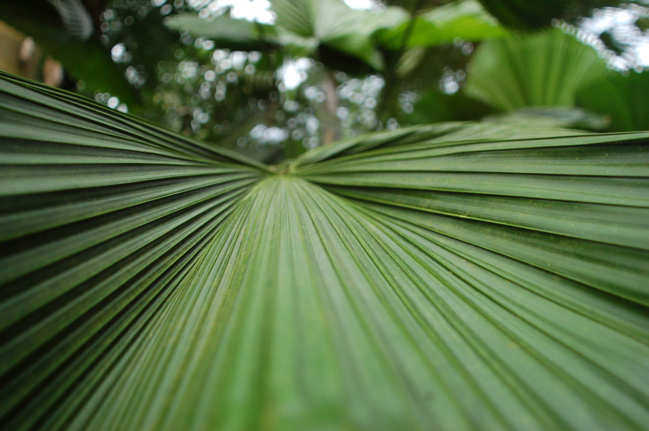 A palm frond in the tropical biome in the Eden Project at St. Austell, Cornwall, UK Green Greenery Hothouse Leaf 🍂 Palm Palm Frond The Eden Project Tropical