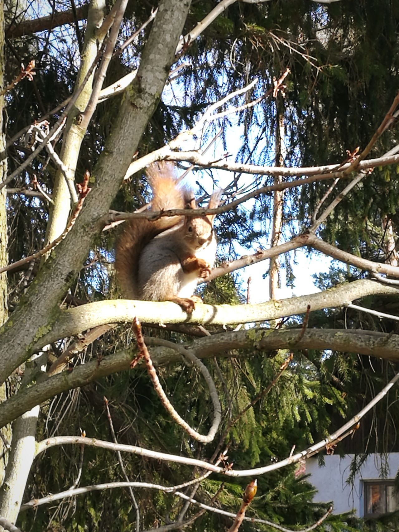 One Animal Animal Themes Tree Low Angle View No People Nature Branch Ape Outdoors Day Squirrel Wazzup Urban Lifestyle Spring