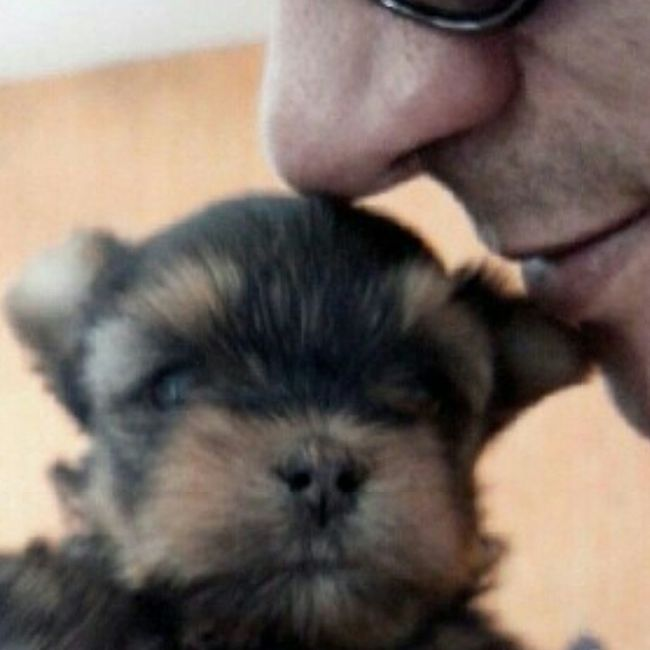 Dog❤ Close Face Love Nouse Sunnglases Litlle Dog Yorkshire